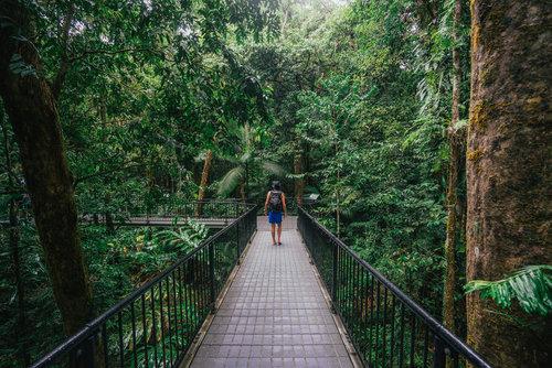 Elevated+walkways+Mossman+Gorge+(1)