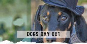 Dogs Day Out @ Jalunbu Park   Port Douglas   Queensland   Australia